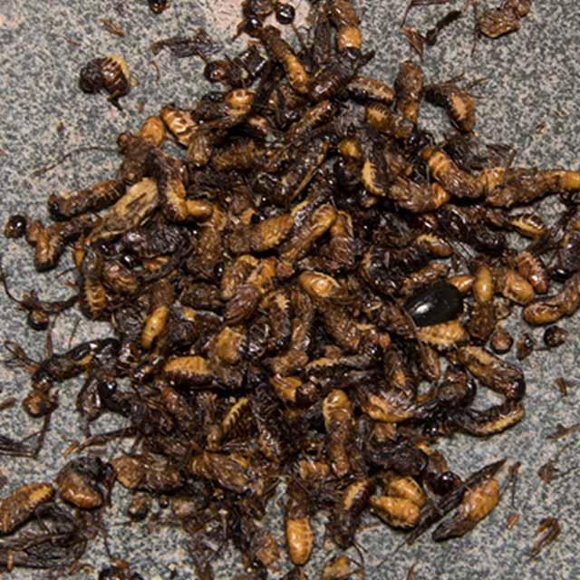 Thai Flying Termites The Eddy East Village