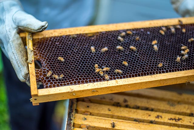 Bee hives at Stinger InterContinental Times Square